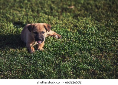 Cute playing puppy dog on a green grass