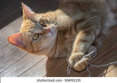 Hemingway Cat Images, Stock Photos & Vectors | Shutterstock  Hemingway Cat I...