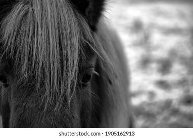 Cute pony portrait, black and white