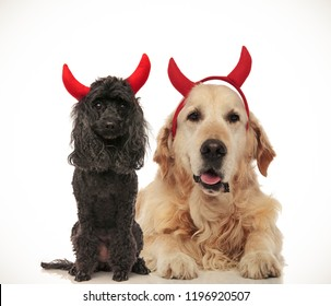 cute poodle and golden labrador retriever posing as devils for halloween