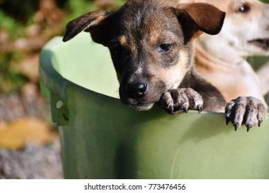 A cute poppy action  in water bucket.