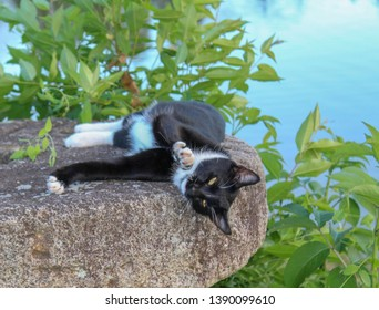 Cute Portrait of Tuxedo Cat lying on old Millstone, selective focus on cat