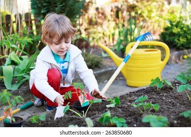 Cute preschool blond boy planting seeds and seedlings of tomatoes in vegetable garden