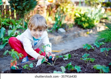 Cute preschool blond kid boy planting seeds and seedlings of tomatoes in vegetable garden. Happy carefree childhood. Funny child having fun with gardening in spring.