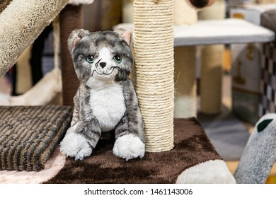 Cute products inside a pet superstore. A closeup view of a small stuffed toy kitten, sat by a scratching pole for cats, for sale inside a department store for pets, with copy space on the right.