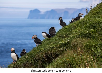 Cute puffins and beautiful landscape on Mykines in the Faroe Islands