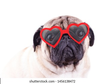 Pug In Glasses Images Stock Photos Vectors Shutterstock