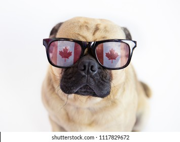 Cute pug dog wearing Canadian Flag sunglasses for Canada Day