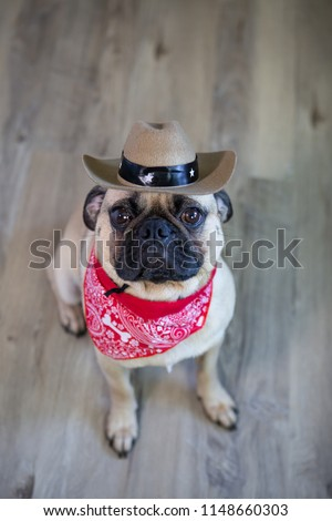 Cute Pug Dog Wearing Cowboy Hat Stock Photo (Edit Now) 1148660303 ... a258dface45