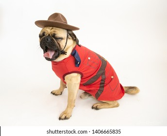 Cute pug dog wearing a Royal Canadian Mounted Police costume and hat