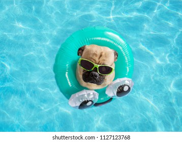 Cute pug dog wearing sunglasses floating in a swimming pool with a blue ring flotation device