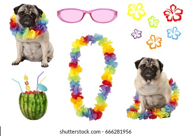cute pug puppy dog with colorful summer party elements, isolated on white background