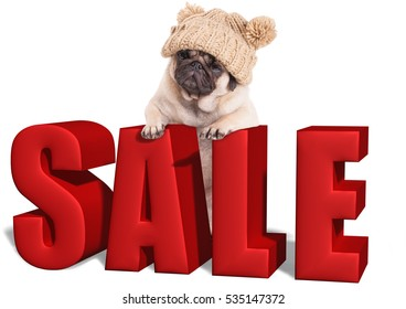 cute pug puppy dog hanging with paws on big red sale sign, isolated on white background