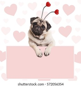 cute pug puppy dog with hearts diadem, hanging on blank pale pink promotional sign