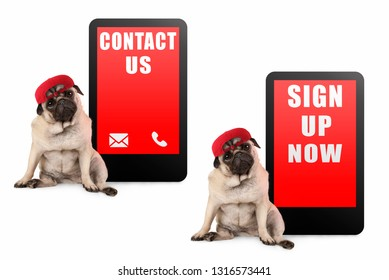 cute pug puppy dog looking smart, sitting next to tablet phone with text contact us and sign up now, wearing red cap, isolated on white background