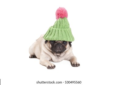cute pug puppy dog lying down and looking grumpy, wearing green knitted hat with pink pompom, isolated on white background