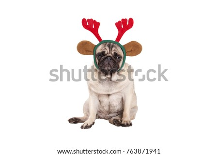 cute pug puppy dog with reindeer antlers diadem for Christmas, sitting down, looking grumpy, isolated on white background