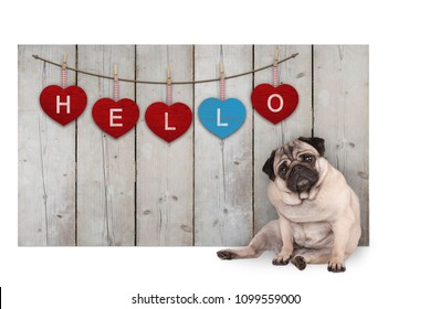 Cute pug puppy dog sitting down next to wooden fence of reclaimed barn wood with red and blue hearts with text hello, isolated on white background