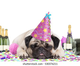 cute pug puppy dog wearing pink party hat, lying down on colorful confetti, fed up and drunk on champagne, tired of partying, on white background