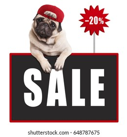 cute pug puppy dog wearing red cap, hanging with paws on blackboard sign with text sale and 20 percent off, isolated on white background