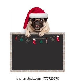cute pug puppy dog wearing santa hat hanging with paws on blank blackboard sign with Christmas decoration, isolated on white background