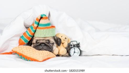 Cute Pug Welpen umarmt Lieblings-Spielzeugbär und schläft bei Wecker auf einem Kissen unter weißer Decke zu Hause. Leerzeichen für Text