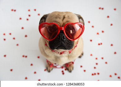 Cute pug wearing heart shaped sunglasses and surrounded by hearts
