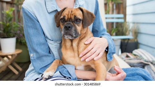 Cute Puggle Sitting on Woman's Lap outside