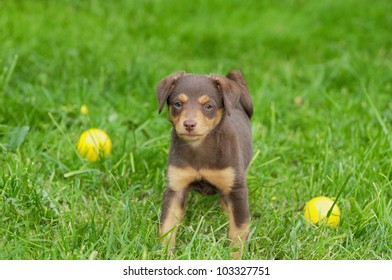 cute puppie dog 8 weeks with ball