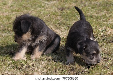 cute puppies in the meadow in spring time
