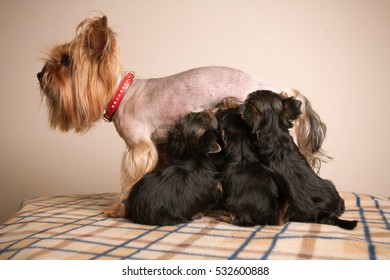 Cute puppies and their mother.