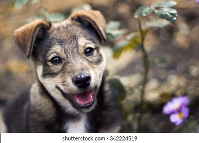 cute puppy among the grass and flowers