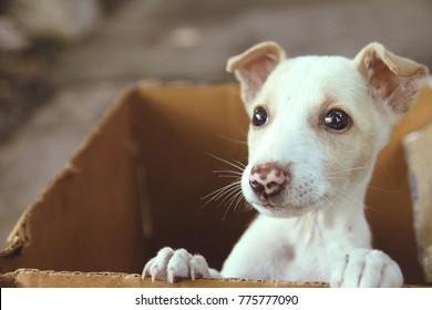 Cute Puppy in a box