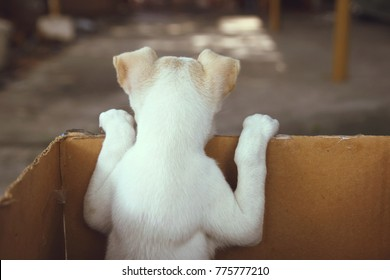 Cute Puppy in a Box - Back View