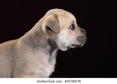 Cute puppy, close-up portrait