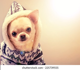 cute puppy in coat and hood looking at camera