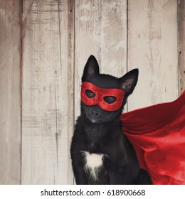 A cute puppy dog is dressed up as a super hero in a cape and red mask on a wood background for a strong animal message.