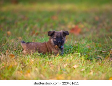cute puppy dog in the grass looking at the camera