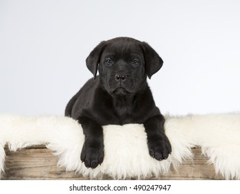 Cute puppy dog. Image taken in a studio.