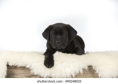 Cute puppy dog. Image taken in a studio.