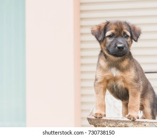 Cute Puppy dog looking to owner coming home with vintage filter.Focus at dog eye.Concept of caring for animals with love.
