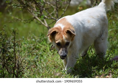 Cute puppy dog on the green forest, star dog, my honey dog, super cute pet dog, my loving pet, very cute puppy, super mixed dogs, nature dogs, hunting per, hunting pet, my pet is hunting something