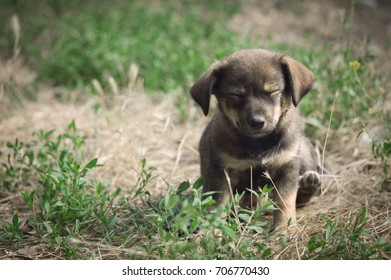Cute puppy in dramatic filter.effect with sad look is sitting on the grass in the cloudy weather. Concept Day of protection of homeless animals. Copy space,place for text.