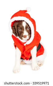 Cute puppy dressed in a Christmas Santa Claus outfit