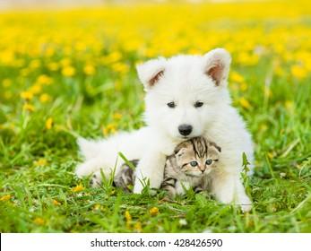 Cute puppy embracing a kitten on a dandelion field