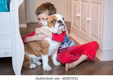 Cute puppy english bulldog hanging with handsome boy in bed room close to yellow clock green tree and white bed on wooden floor.Friendship between human and dog.