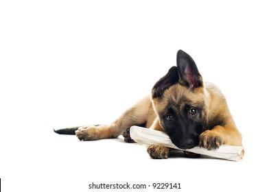 Cute puppy enjoying its morning paper
