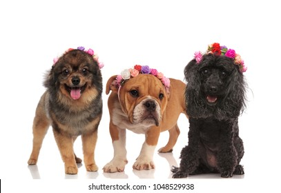 cute puppy friends wearing flowers headband in the spring while standing on a white background