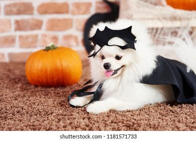 Cute puppy in halloween costume