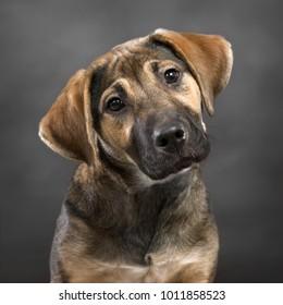 cute puppy with head tilt